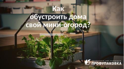 Как обустроить дома свой мини-огород?