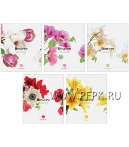 Тетрадь 96л Цветы (223-564/Т96к_7864)