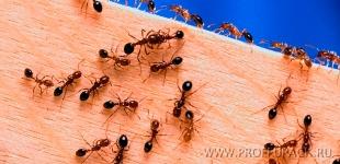Отрава для муравьев — выгодный товар для продаж круглый год
